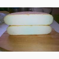 Сыры из козьего молока Камерунских карликовых коз