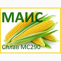 Семена кукурузы Сплав МС 290 (ФАО - 290) 2018 г.у. (МАИС)
