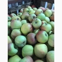 Продамо яблука високої якості!Зберігаються в холодильній камері з РГС