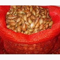 Продам лук семена