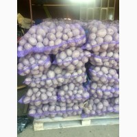 Продам картофель гранада белороса Королева Анна