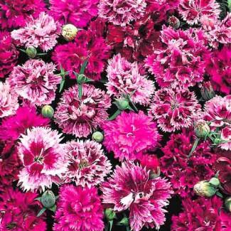 Продам насіння різних квітів фірми W.Legutko