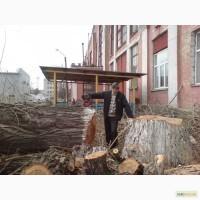 Удаление деревьев Киев. Кронирование, Обрезка деревьев. Спил деревьев Киев. Корчевание