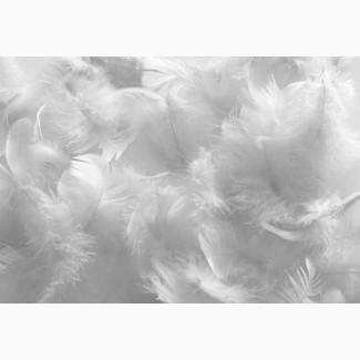 Продаю гусиные перья