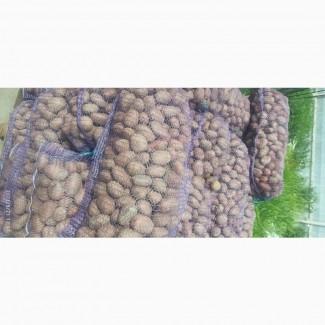 Продам семенной картофель, насіннева картопля, картопля на посадку