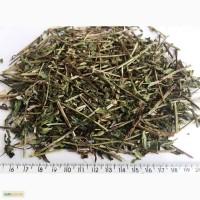 Мята перечная трава