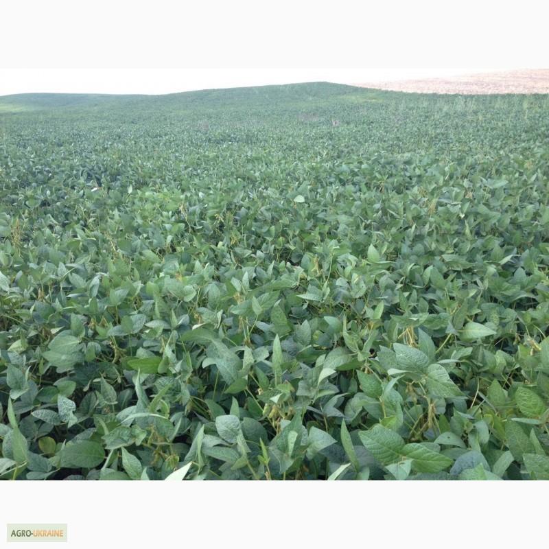 Фото 4. Продам насіння соі під раундап с Аполло та сорти Венус і Алігатор ( не ГМО)