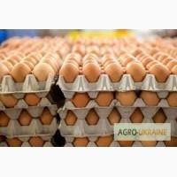 Продам коричневое яйцо