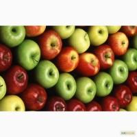 Торгова компанія шукає надійного оптового постачальника яблук в Україні