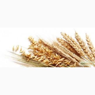 Закупаем пшеницу 2-6 класса