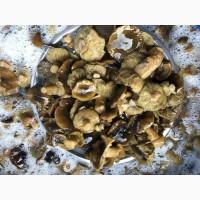 Продаємо гриби зібрані на Волині
