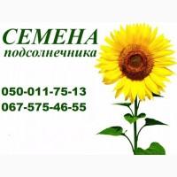 Семена подсолнечника под Гранстар Бонд, НСХ-2017, Рембо, НСХ-498
