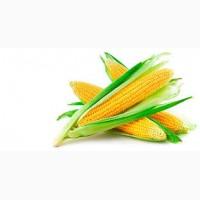 Продам гібридне насіння кукурудзи