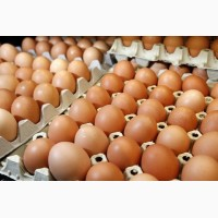 Закупаем яйца куриные оптом