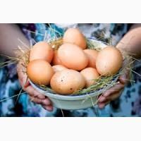 Продам яйцо домашнее отборное