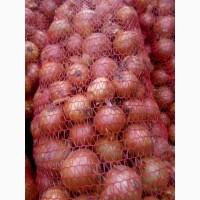 Продаём лук оптом сорта Медуза, Имага, Тамара от производителя