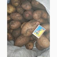 Картофель Картопля домашняя 3 т