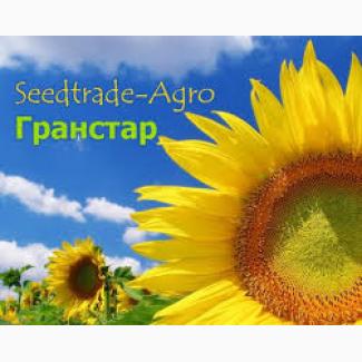 Продам посівний соняшник НС Х 1749