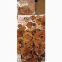 Продам мухомор сушеный собранный в Карпатах