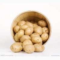 Продам єлит картофель