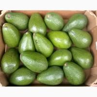 Продам авокадо из Испании оптом