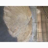 Продам овес урожай 2020 року