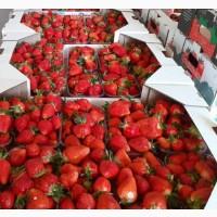 Продам клубнику сорт клери Альбион