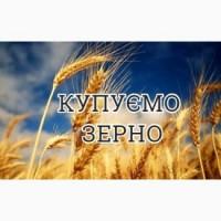 Організація закуповує пшеницю, жито, ячмінь, кукурудзу сою