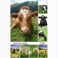 Купить премиксы для дойного стада коров
