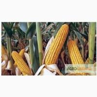 Насіння Монсанто Monsanto ФАО 170 - 330