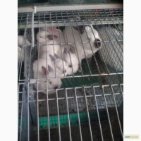 Продам кролів на утримання