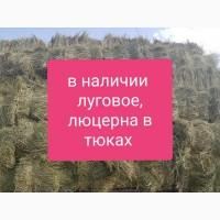 Люцерна в тюках, 800т. Доставка по Украине бесплатно