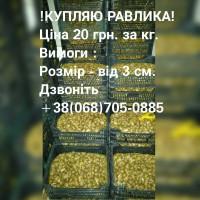 Купляю виноградного равлика, слимака 20 грн. за кг ( улитка, улитки )