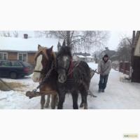 Продаю коні