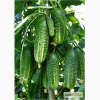 Семена овощей: Огурцы