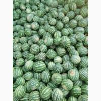 Продам арбуз возле Умані 4 тон