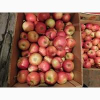 Продам яблука сорт; Айдарет малиновый 12грн; перший сорт 6, 5+; 15грн вищий сорт 8+;