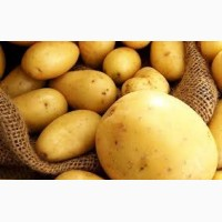 Продам картофель молодой сорт ривера