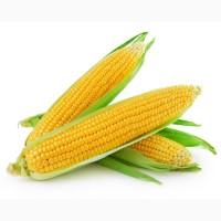 Кукурудза для виготовлення борошна та крупи (зерно в мішках по 25 кг.)