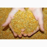 Покупаем пыльцу пчелиную оптом от 300 кг. Херсон, Юг Украины