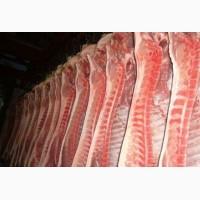 Охлоджене м#039;ясо свинини