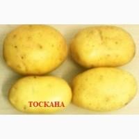 Продаём семенной картофель