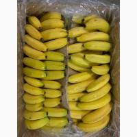 Бананы Свежие цена 12.50 грн. Коста Рика Эквадор