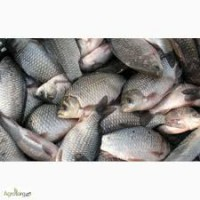 Продаем свежую живую Рыбу, Раки - Самое Лучшее Качество в Украине