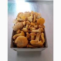 Куплю свіжі гриби білі, лисичку, ягоду чорницю