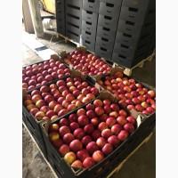 Продам високоякісні яблука з холодильника різних сортів (газовка)