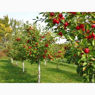 Продаємо Травосуміш для благоустрою Садових територій та міжрядь
