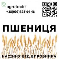 Семена озимой пшеницы от производителя - ГК Агротрейд