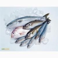 Рыба и морепродукты оптом в Харькове