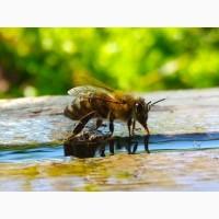 Продам бджолопакети та бджолосім ї